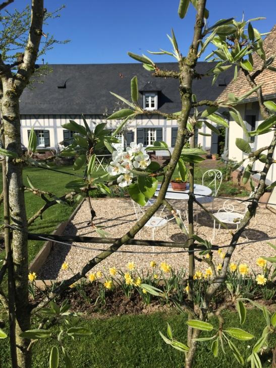 Vue de la maison derrière les poiriers en fleurs